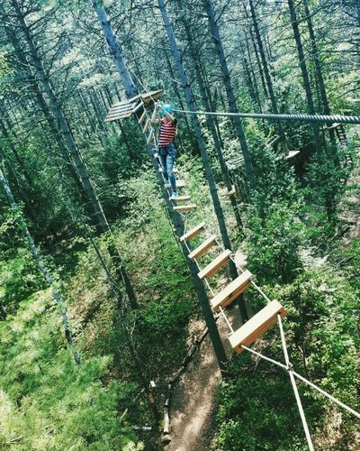 Tree top trekking Nature Photography Extreme Sports Tree Top Adventure Tree Top Walk Adventure Is Out There Adventure Plant Tree Day Nature Green Color Growth Outdoors