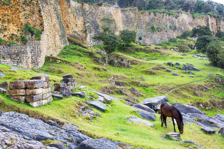 Horse grazing in front of the ancient walls of the fortress city of Kuelap, Peru Amazonas Ancient Archeology Architecture Building Chachapoyas Chachapoyya City Culture Fortress Green Horse Kuelap Old Ruin Ruins South America Stone Tourism Travel Travel Destinations Utcubamba