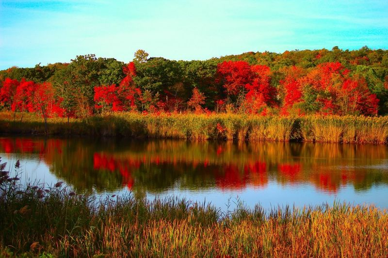 Fall Beauty Autumn Beauty In Nature Tranquil Scene Leaves Autumn Leaves Autumn Colors Reflections In The Water