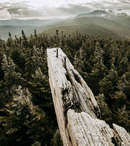 Tree stump by mountains against sky