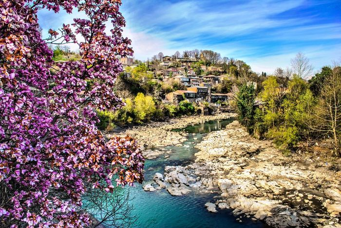 Spring in Kutaisi Architecture Beauty In Nature Beauty In Nature Bridge Building Exterior Colors Day Flower Georgia Growth Hill Kutaisi Landscape Nature Nature No People Outdoors Plant River Photography Riverside Scenics Sky Travel Destinations Tree Water Summer Exploratorium