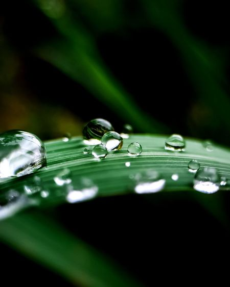 Close-up of water drops on blade of grass