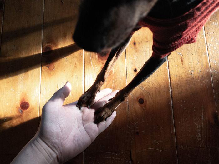 Close-up of pet owner training dog