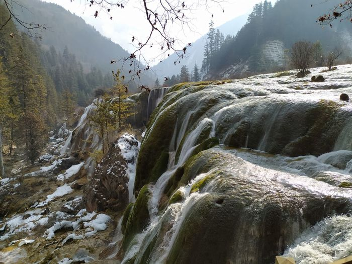 Plants growing by stream in forest during winter