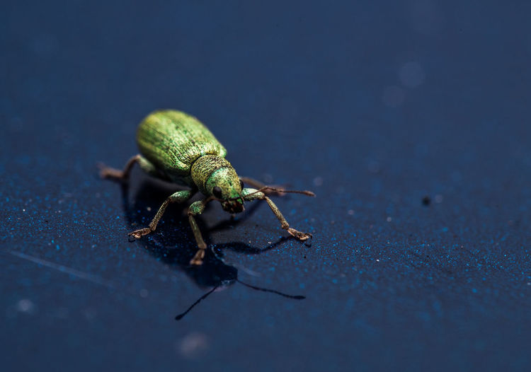 A small bug i photographed a while ago on the roof of our car Animal Themes Animals In The Wild Bug Close-up Eye4photography  EyeEm EyeEm Best Edits EyeEm Best Shots EyeEm Best Shots - Nature EyeEm Gallery EyeEm Nature Lover Green Color Insect Macro No People One Animal Outdoor Photography Outdoors Photography Selective Focus Taking Photos Taking Pictures Walk Wildlife Zoology