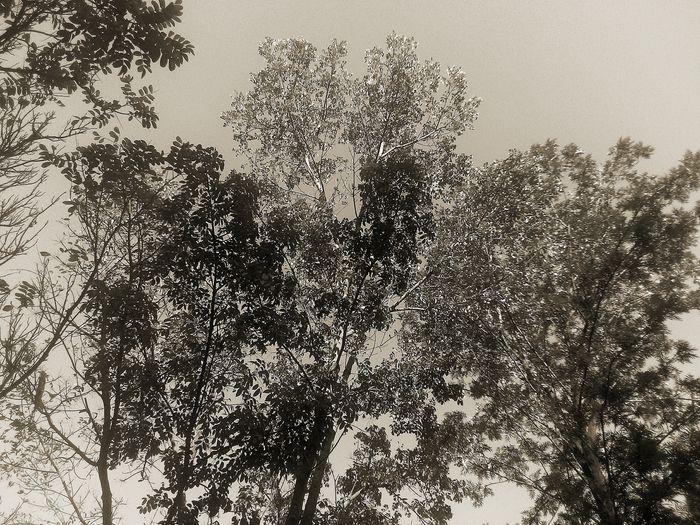 Tree Sky Growth