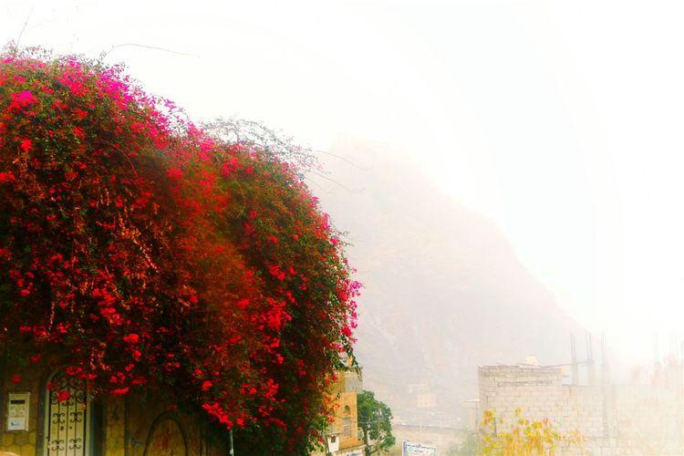 Rain Rain Cloud Taiz City Yemen Nice Weather Khalif Alsaeed Photography Rainbow