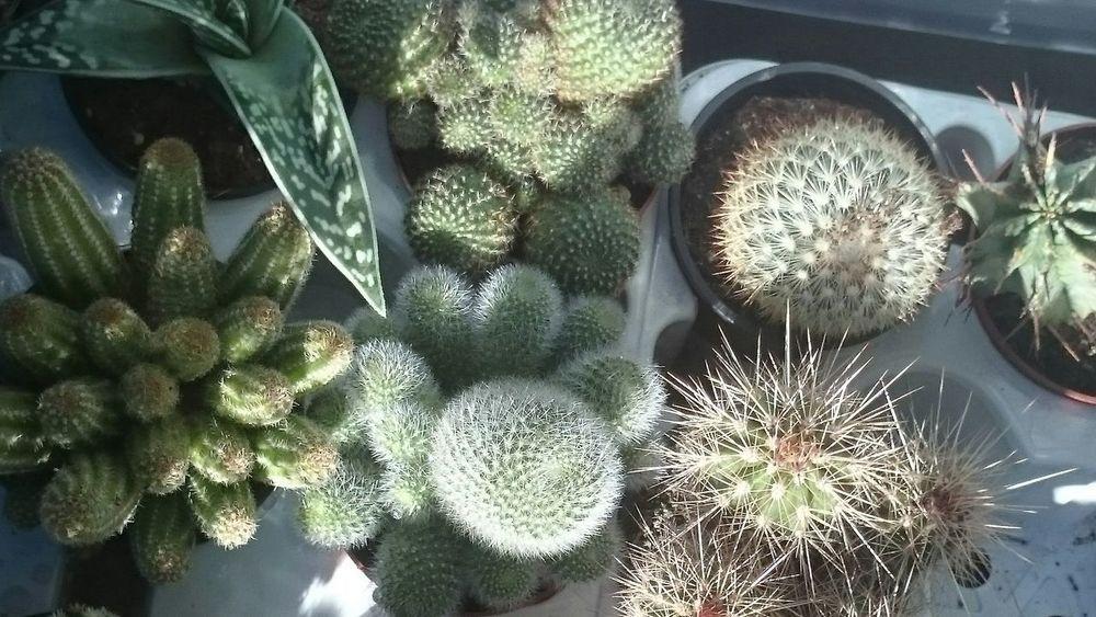 I Love Cactus EyeEm Cactus