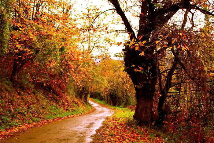 Autumn Beauty In Nature Change Colors Country Road Diminishing Perspective Empty Road Forest Kvission Landscape Magical Places Mónica Nogueira. Nature Non-urban Scene Outdoors Relaxing Moments Road Scenics SPAIN Spain Is Different The Way Forward To Discover Tranquil Scene Tranquility Tree