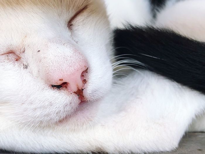 Full frame of sleeping cat face in white fur with black tail. EyeEm Selects Animal Cat Animal Themes Mammal One Animal Feline Domestic Cat Domestic Animals Domestic Vertebrate Relaxation Close-up Animal Body Part Whisker Sleeping Eyes Closed  No People Resting White Color