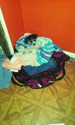 Presley Marie Kenney. Puppy Blue Tick Walker Presley Marie