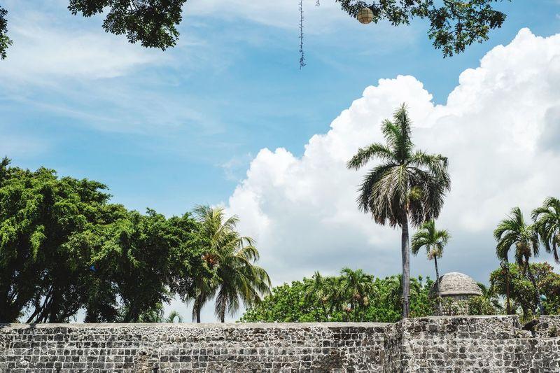 fort san pedro Fort Fort San Pedro San Pedro Cebu Philippines Philippinen Castel Palms Stone Tree Sky Cloud - Sky Plant