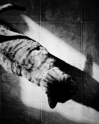 twenty-four. B & W By Yeli Black And White Pets Domestic Animals One Animal Animal Themes Indoors  Dog Tiled Floor Mammal High Angle View Home Interior No People Domestic Cat Relaxation Day Close-up