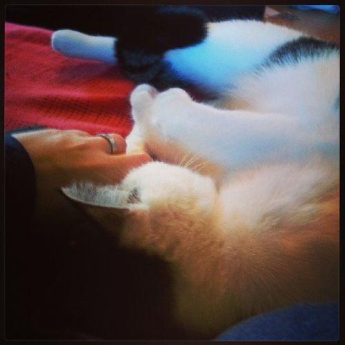 Q_wie Quälgeist ;) Cats Dude schmusekater ABCFee abc_cbg
