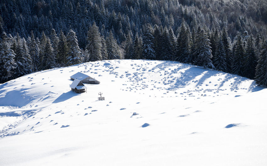 Snow covered pine trees on field during winter