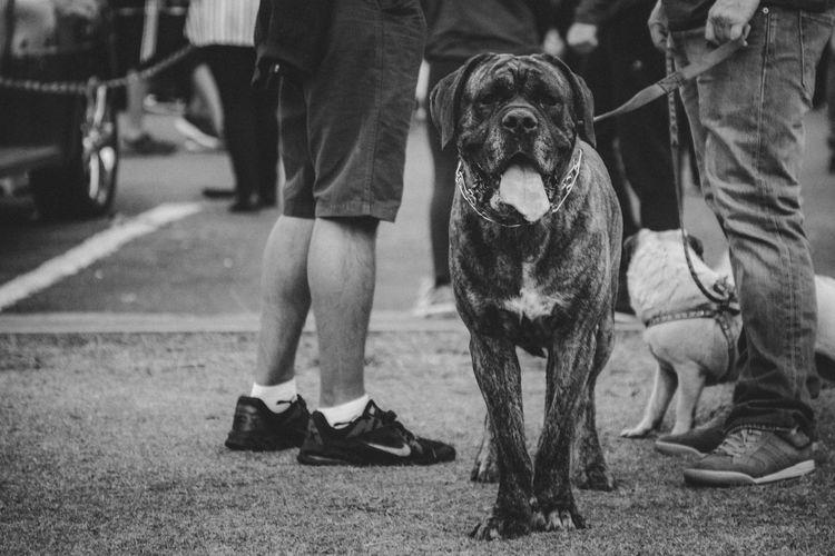 dog Dog Pet