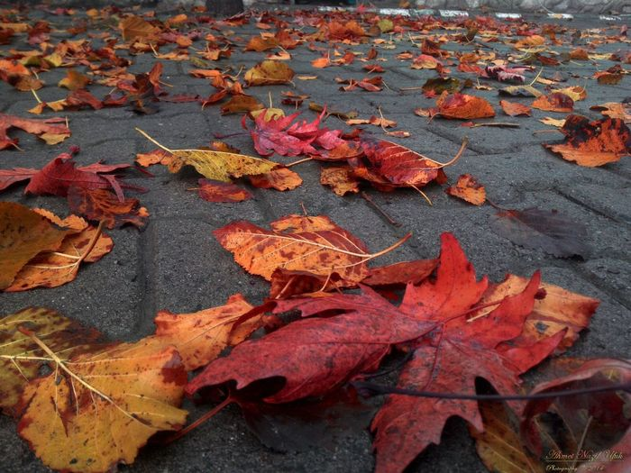 Change Autumn Plant Part Leaf Leaves Day Orange Color Falling Fragility Maple Leaf Close-up Outdoors Vulnerability  Nature Dry High Angle View No People Beauty In Nature Plant Red