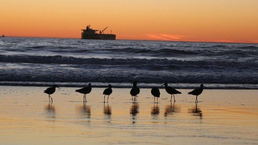 Eyem Vision No Filter Sunsets Sundown Birds Ocean Love Pacific Ocean Cali Sunset Follow4follow Follow Like Nature EyeEmNewHere Miles Away