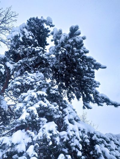 Low angle view of snow covered tree against sky