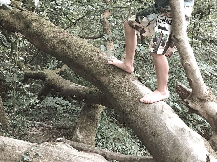 No beach today Boy Tree Day Outdoors Leisure Activity Tree Trunk Climbing Low Section Having Fun :) Togetherness Family Matters Exploring Nature Text The Week On EyeEm
