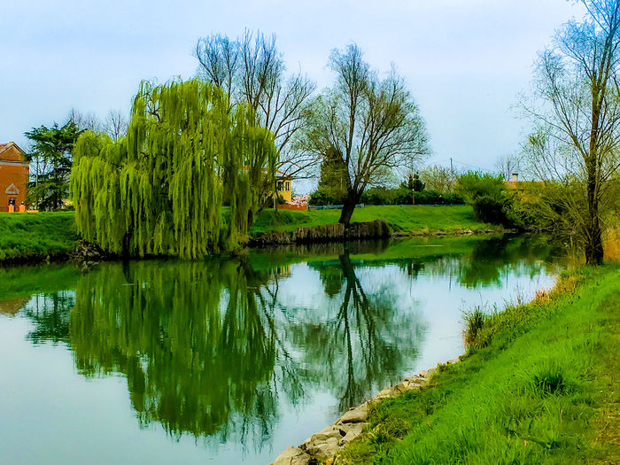 Fiume Sile Outdoor Photography Reflection River Bank  Salixgracilistyla Tre Palade