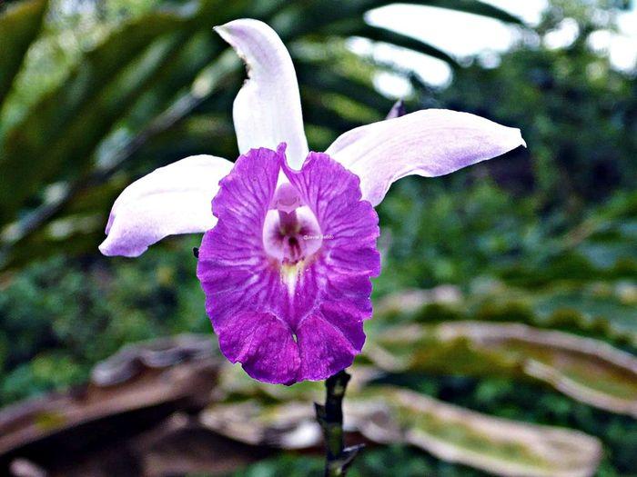 La flora por Costa Rica es muy variada y hermosa Travelling Travel Photography Viaje A Costa Rica Fotografia De Viaje