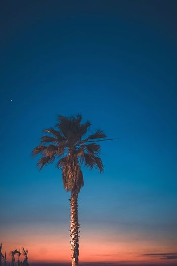 Low angle view of palm tree against dramatic sky during sunset