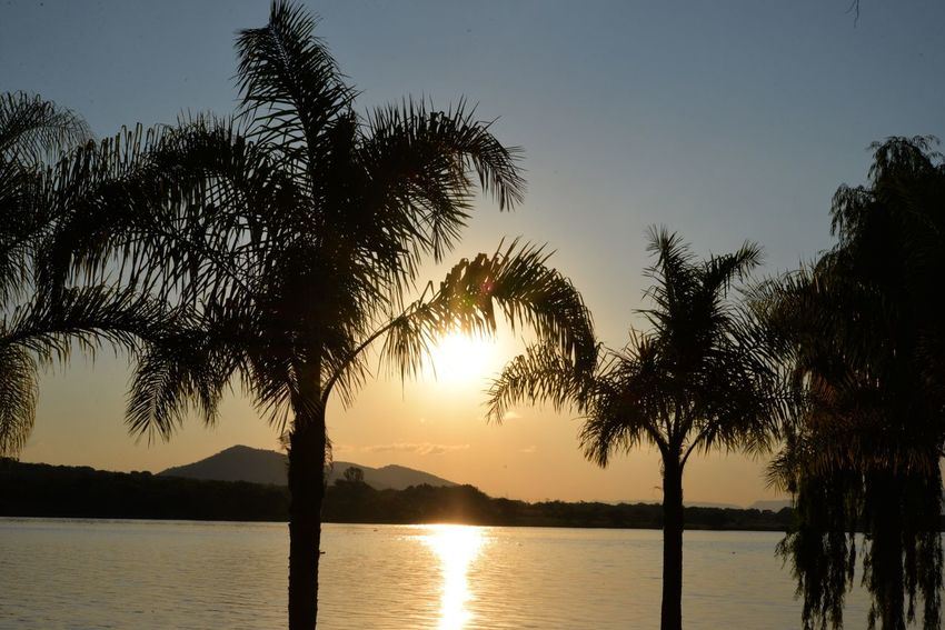Palm trees and ☀️ Tree Sunset Beauty In Nature Scenics Nature Palm Tree Silhouette Tree Trunk Water Sky Tranquility Tranquil Scene Idyllic Sun Outdoors Sea No People Growth Branch Day Hartebeespoort Harties Hartbeespoort Dam South Africa
