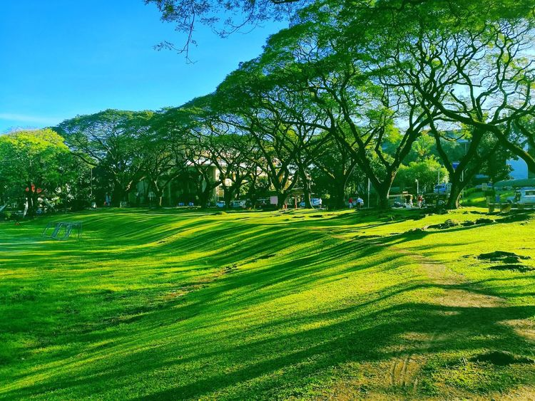 UP Sunken Garden Campus Life University Of The Philippines Sunken Garden Philippines Up Diliman Campus Green Color Nature Tree Beauty In Nature Grass
