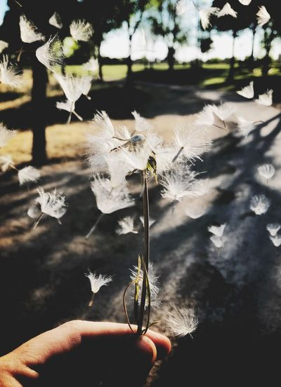 Plant Hand Human Hand Human Body Part Nature Holding Real People One Person Flower Focus On Foreground Fragility Close-up Day Sunlight Body Part Unrecognizable Person Flowering Plant Vulnerability  Outdoors Finger