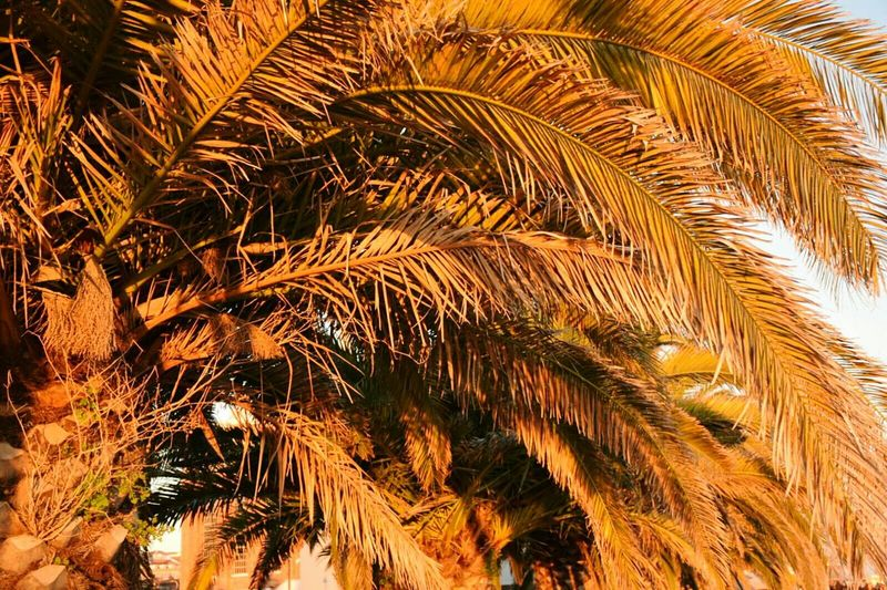 Nature No People Tree Close-up Outdoors Sky Day Palm Tree Sunset