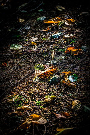 Fall Colors Vignette Volatile WoodLand Brown Close-up Fall Fallen Fallen Leaves Field Forest Forest Floor Forest Soil Ground High Angle View Leaf Nature Night No People Outdoors Transience