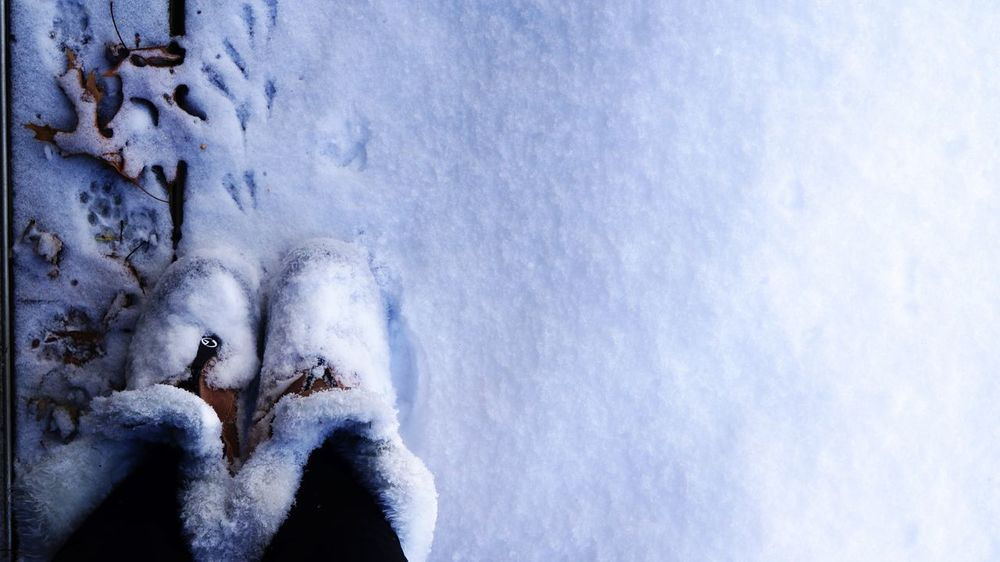 Animal Prints Boots Boots❤ Cat Print Cold Cold Temperature Copy Space Faux Fur Horizontal Leaf 🍂 Leafs Left Side Legs Legsselfie Looking Down Prints Selfie Snow Snow ❄ Squirrel Prints Tracks Weather White Winter Wintertime
