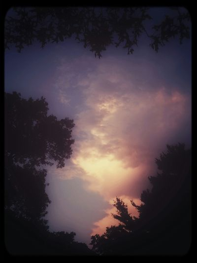A silhouette of trees and leaves to frame the clouds at sunset. KimberlyJTilley