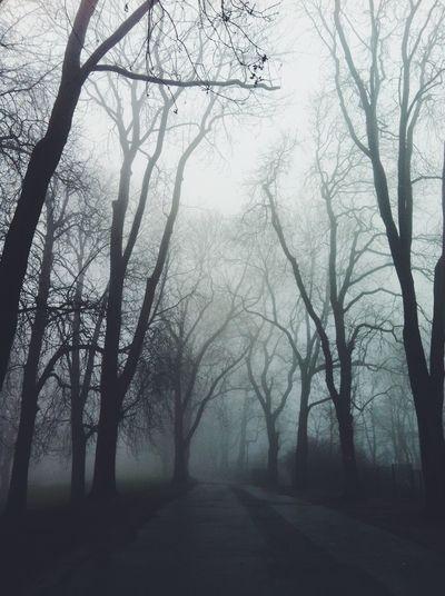 The mist Misty