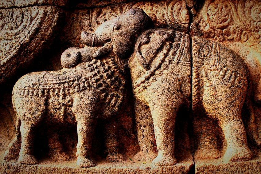 The elephant and the bull from the great living chola temple in darasuram,indiaAmazing Architecture Temples India Ancient Architecture Ancient Temple Chola Darasuram