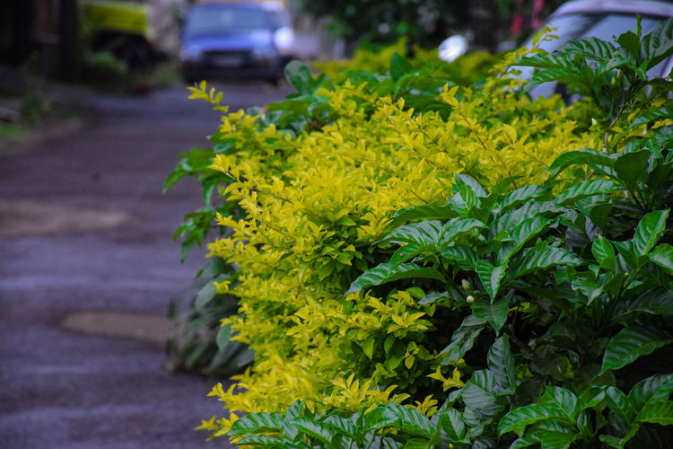 Close-up of yellow flowering plant in city