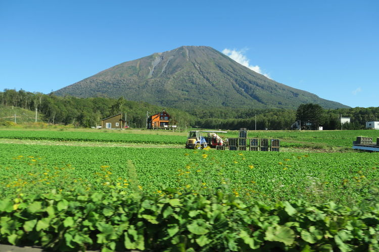 autumn niseko hokkaido japan 2018 In One Photograph It's About The Journey Moments Of Happiness Capture Tomorrow Nature Tree Autumn Day Outdoors Grass Mountain Hokkaido Agriculture Niseko Yotei EyeEmNewHere Yotei Mt., Hokkaido Yotei Mt. Holiday Moments A New Perspective On Life Landscape Plant Sky Land Field Environment Green Color Growth Scenics - Nature Beauty In Nature Rural Scene Tranquil Scene Farm Crop  Clear Sky Tranquility No People