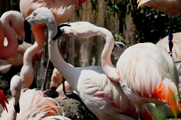 Fight Flamingos