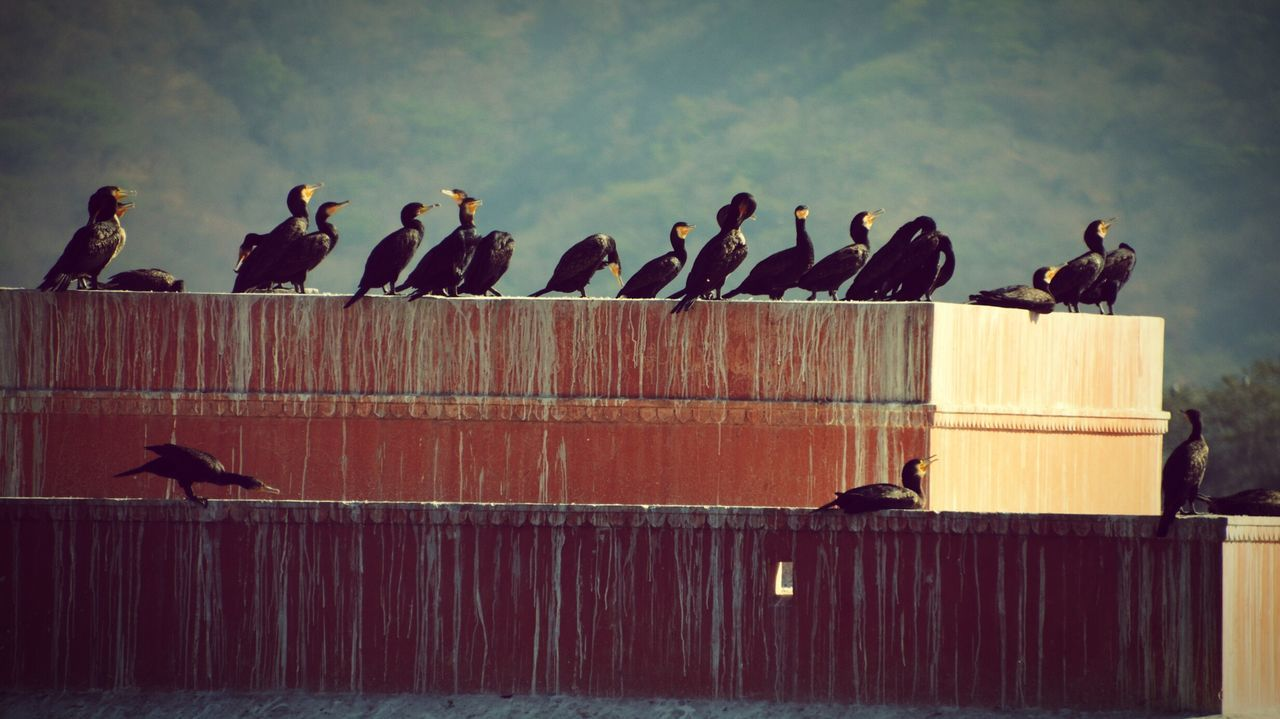 Flocks Of Birds Perching On Built Structure