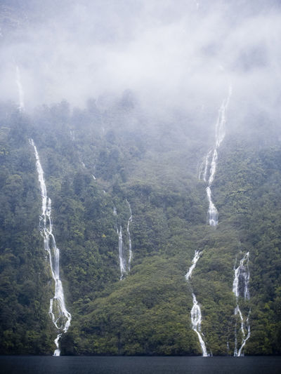 Fiordland New