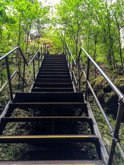 Stairs in Nature's Green Stairs Steps Nature Trees Green Green Leaves Upward Perspective Stairs In Nature Woods Forest Walkway Steep Stairs Metal Stairs Forest Path