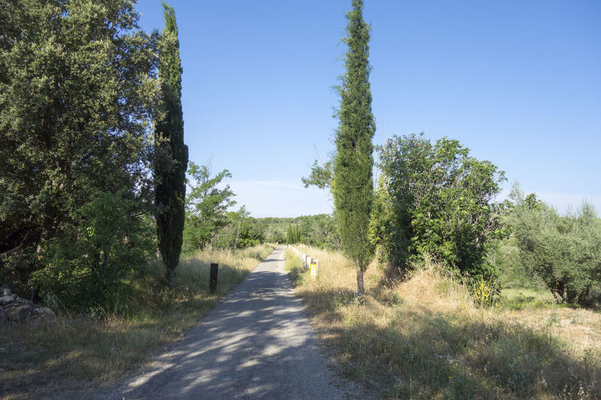 Bike Castellón Clear Sky Cycling Day Grass Greenway Growth Landscape Nature Nature No People Ojos Negros Outdoors Plant Road Scenics Sky SPAIN Summer The Way Forward Tree València Via Verde Way