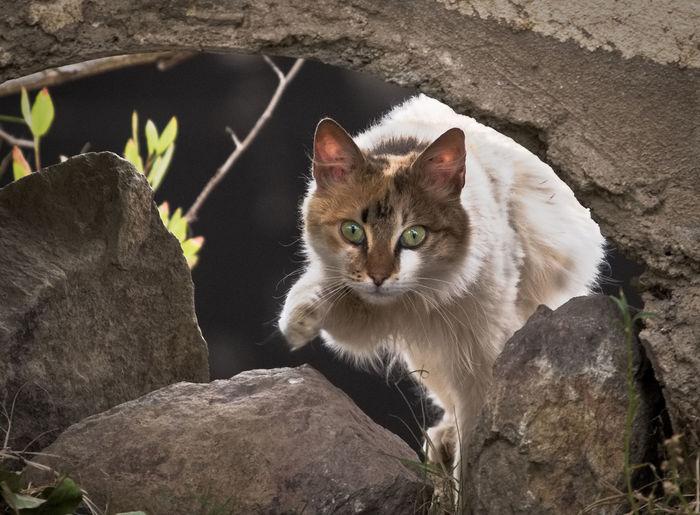 cat Cat Day
