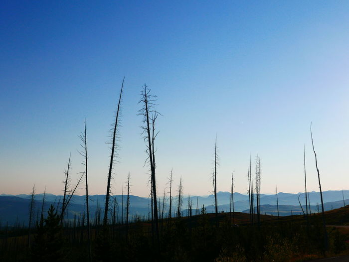 An Eye For Travel Blue Sky Clear Sky Day Dead Trees Early Morning Early Morning Sky Landscape Mountain Nature Non-urban Scene Silhouette Sunrise Tranquil Scene
