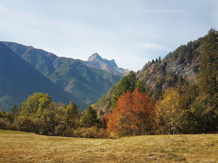 Autumn Autumn Colors Tranquility Silence Valle Varaita Panoramic Mountain Mountain Outdoors Mountain Range Nature Tree Scenics Day No People Beauty In Nature Landscape Sky