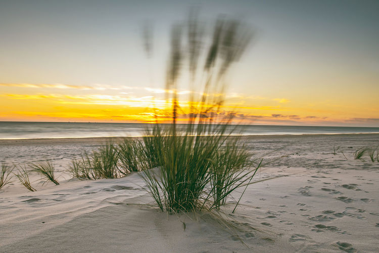 Sunset Baltic Sea Beach Beauty In Nature Cloud - Sky Europe Horizon Horizon Over Water Idyllic Land Long Exposure Marram Grass Motion Nature No People Outdoors Plant Sand Scenics - Nature Sea Sky Sunset Tranquil Scene Tranquility Water