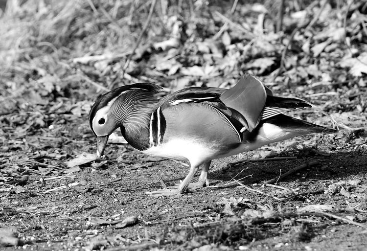 Side view of a bird on land