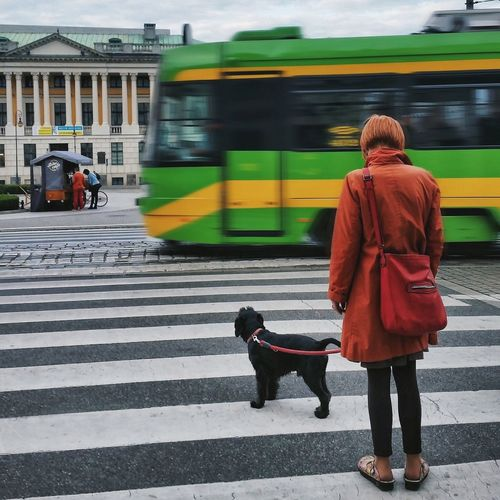 Rear View Of Woman Crossing Road With Dog