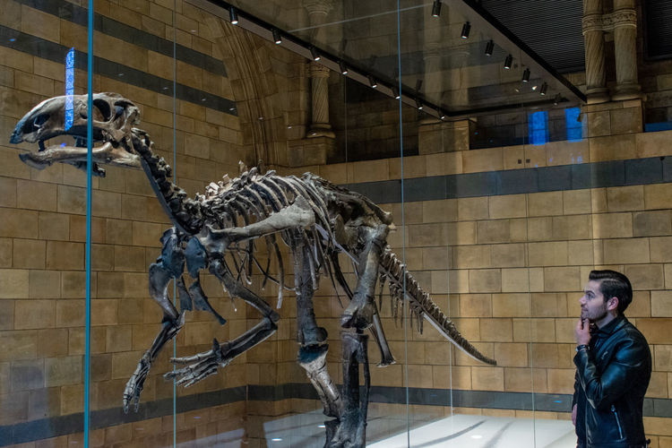 Dinosaur Reptile Animal Wildlife Architecture Art And Craft Built Structure Carnivora Day History Indoors  Mammal Museum People Predator Real People Representation Sculpture Statue The Past Tourism
